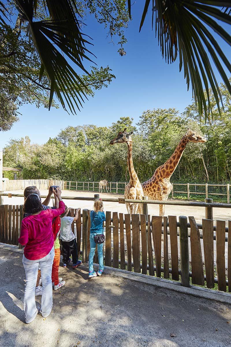 girafes zoo des sables d'olonne